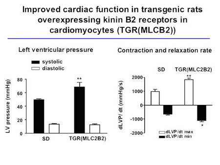 Cardiac function in TGR(MLC2B2) rats